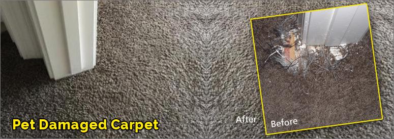 Pet Damaged Carpet Calabasas